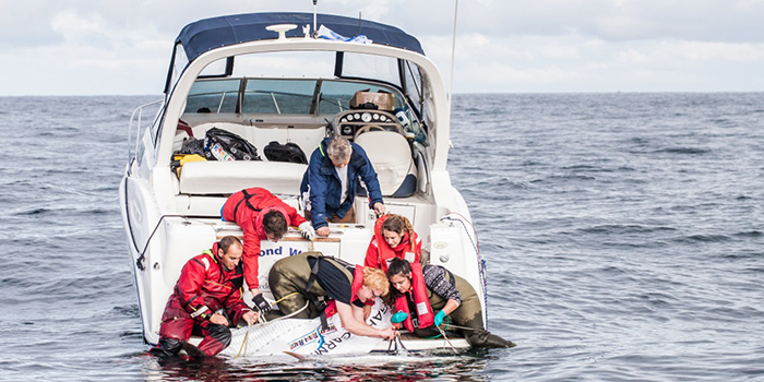 Tuna tagging. Photo: Lars Norman Hestbæk/WWF Denmark