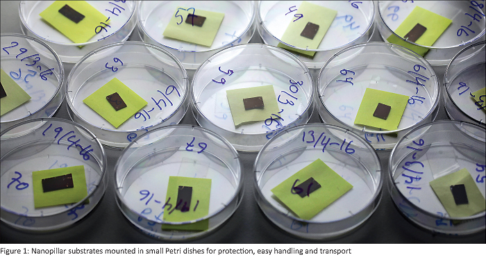 Figure 1: Nanopillar substrates mounted in small Petri dishes for protection, easy handling and transport