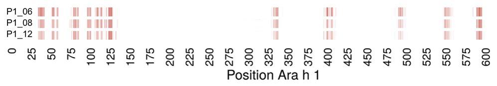 Position Ara h 1.