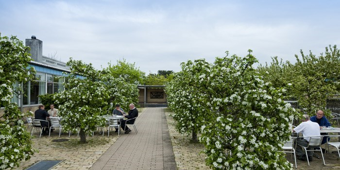 Canteen on Risø Campus. Dining in the apple orchard. Photo: DTU
