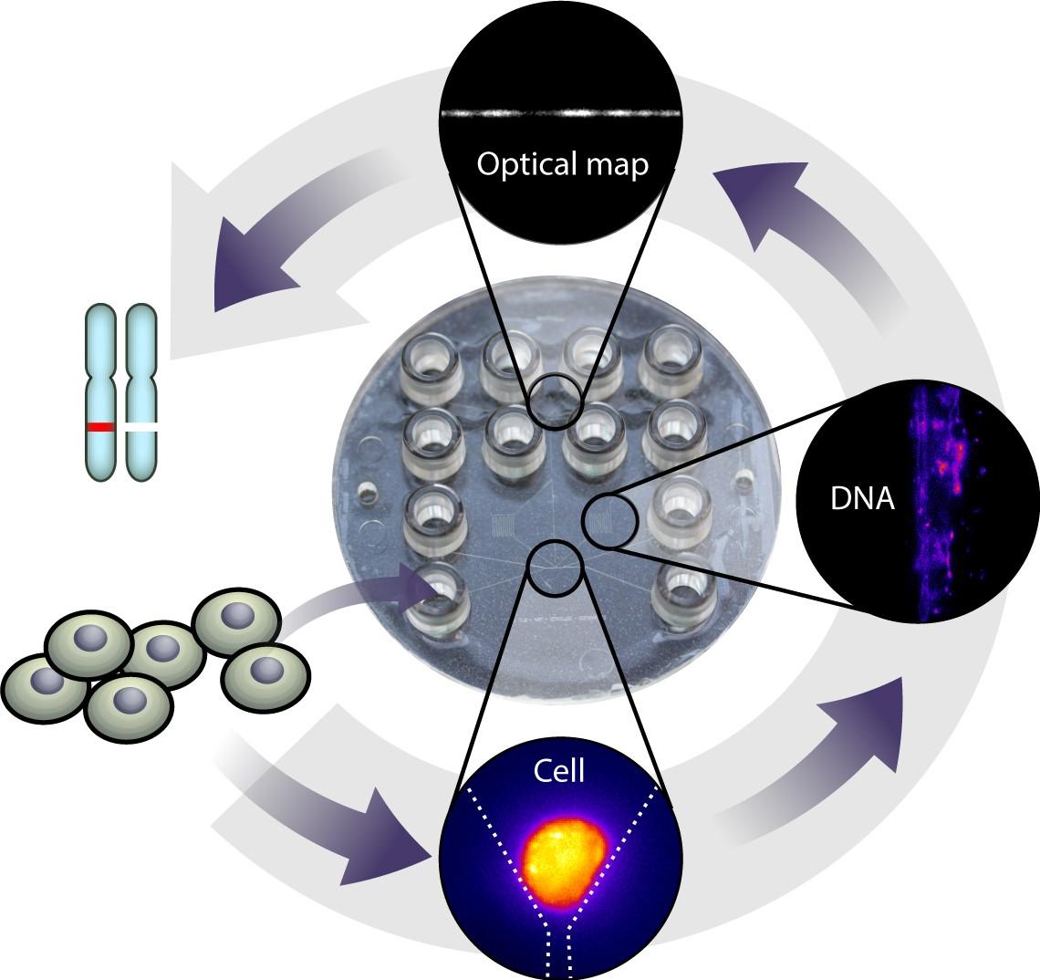 polymer chip